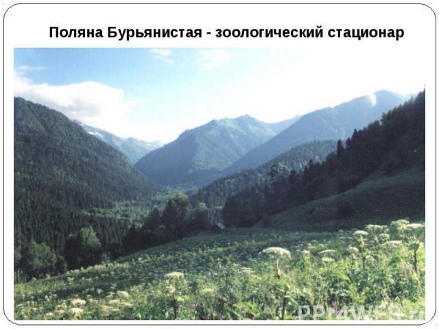 Поляна Бурьянистая - зоологический стационар