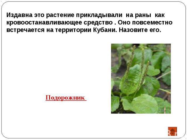 Издавна это растение прикладывали на раны как кровоостанавливающее средство . Оно повсеместно встречается на территории Кубани. Назовите его.Подорожник