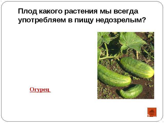 Плод какого растения мы всегда употребляем в пищу недозрелым? Огурец