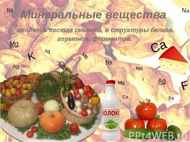 Минеральные вещества входят в состав скелета, в структуры белков, гормонов, ферментов.