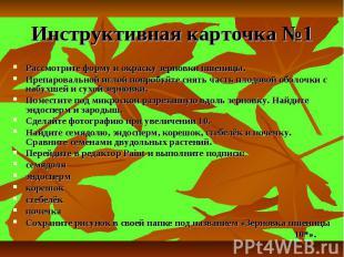 Инструктивная карточка №1 Рассмотрите форму и окраску зерновки пшеницы. Препаров