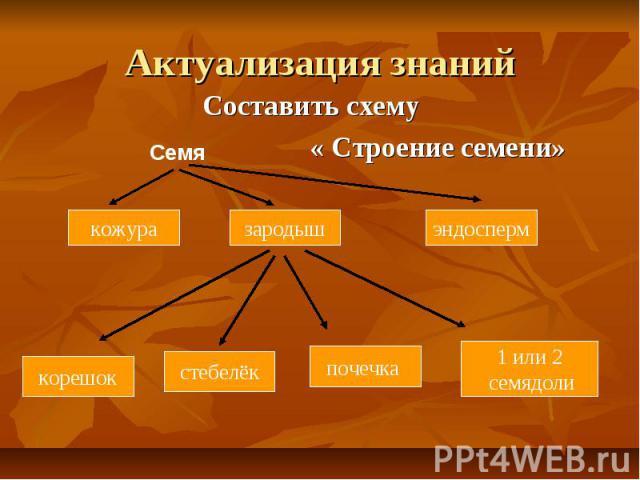 Актуализация знаний Составить схему « Строение семени»