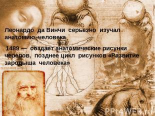Леонардо да Винчи серьезно изучал анатомию человека 1489— создает анатомические
