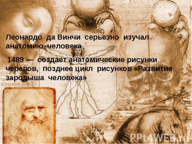 Леонардо да Винчи серьезно изучал анатомию человека 1489— создает анатомические рисунки черепов, позднее цикл рисунков «Развитие зародыша человека»