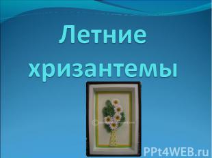 Летние хризантемы