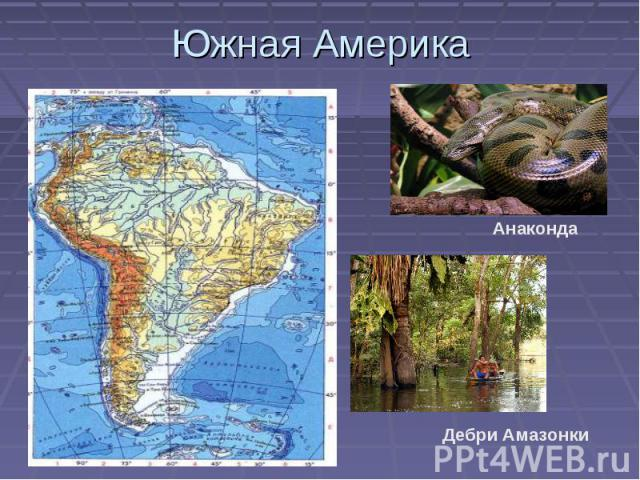 Южная Америка Дебри Амазонки Анаконда