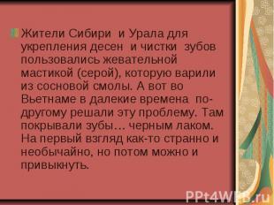 Жители Сибири и Урала для укрепления десен и чистки зубов пользовались жевательн