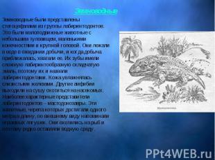 Земноводные были представлены стегоцефалами из группы лабиринтодонтов. Это были