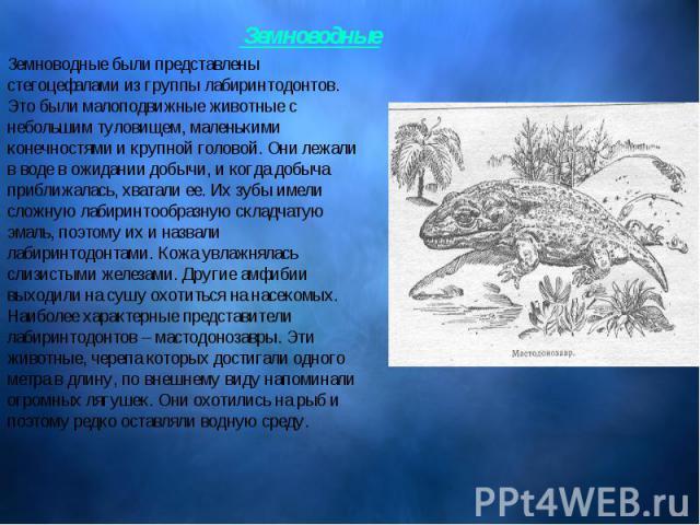 Земноводные были представлены стегоцефалами из группы лабиринтодонтов. Это были малоподвижные животные с небольшим туловищем, маленькими конечностями и крупной головой. Они лежали в воде в ожидании добычи, и когда добыча приближалась, хватали ее. Их…