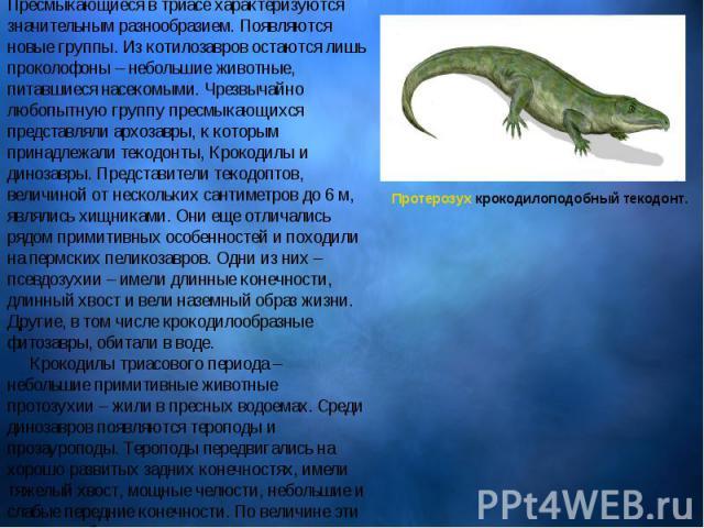 Пресмыкающиеся Пресмыкающиеся в триасе характеризуются значительным разнообразием. Появляются новые группы. Из котилозавров остаются лишь проколофоны – небольшие животные, питавшиеся насекомыми. Чрезвычайно любопытную группу пресмыкающихся предс…