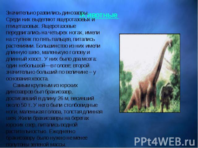 Значительно развились динозавры. Среди них выделяют ящеротазовых и птицетазовых. Ящеротазовые передвигались на четырех ногах, имели на ступнях по пять пальцев, питались растениями. Большинство из них имели длинную шею, маленькую голову и длинный хво…