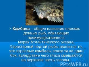 Камбала– общее название плоских донных рыб, обитающих преимущественно в моряхА