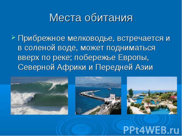 Места обитания Прибрежное мелководье, встречается и в соленой воде, может подниматься вверх по реке; побережье Европы, Северной Африки и Передней Азии