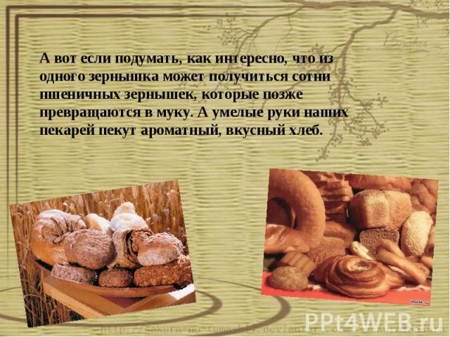 А вот если подумать, как интересно, что из одного зернышка может получиться сотни пшеничных зернышек, которые позже превращаются в муку. А умелые руки наших пекарей пекут ароматный, вкусный хлеб.