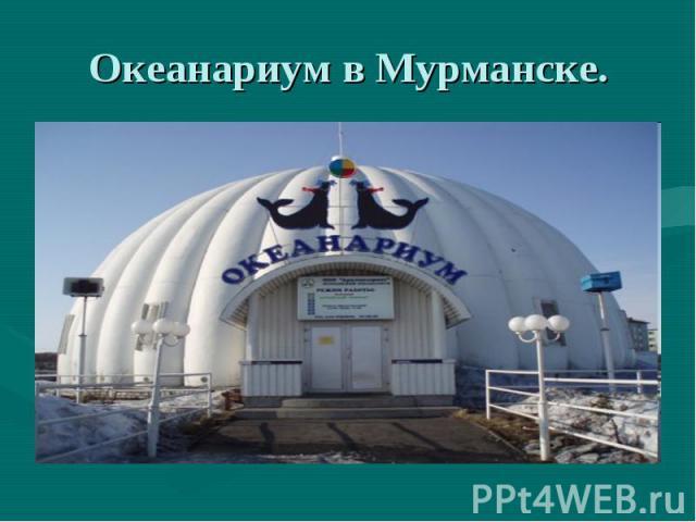 Океанариум в Мурманске.