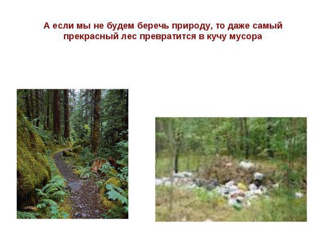 А если мы не будем беречь природу, то даже самый прекрасный лес превратится в кучу мусора