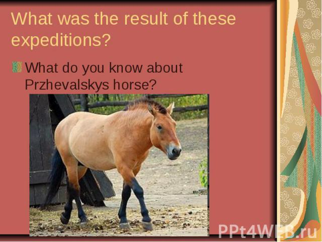 What was the result of these expeditions? What do you know about Przhevalskys horse?