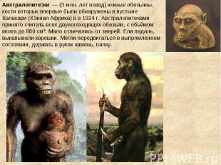 Австралопите ки — (3 млн. лет назад) южные обезьяны, кости которых впервые были