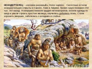 НЕАНДЕРТАЛЕЦ – «человек разумный», Homo sapiens . Скелетные остатки неандертальц