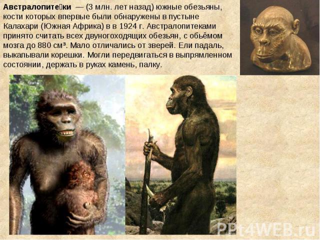 Австралопите ки — (3 млн. лет назад) южные обезьяны, кости которых впервые были обнаружены в пустыне Калахари (Южная Африка) в в 1924 г. Австралопитеками принято считать всех двуногоходящих обезьян, с обьёмом мозга до 880 см³. Мало отличались от зв…