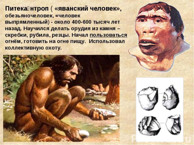 Питека нтроп ( «яванский человек», обезьяночеловек, «человек выпрямленный)- около 400-600 тысяч лет назад. Научился делать орудия из камня – скребки, рубила, резцы. Начал пользоваться огнём, готовить на огне пищу. Использовал коллективную охоту.