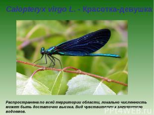 Calopteryx virgo L. - Красотка-девушка Распространена по всей территории области