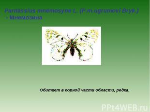 Parnassius mnemosyne L. (P.m.ugrumovi Bryk.) - Мнемозина Обитает в горной части