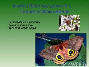 Eudia (Saturnia) pavonia L. - Павлиноглазка малая Встречается в лесной и лесосте
