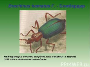 Brachinus hamatus F. - Бомбардир На территории области встречен лишь однажды - в
