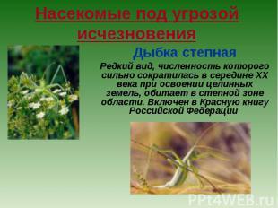 Насекомые под угрозой исчезновения Дыбка степная Редкий вид, численность которог