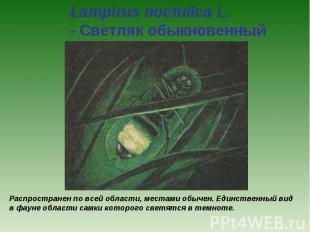 Lampirus noctulica L. - Светляк обыкновенный Распространен по всей области, мест