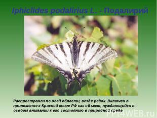 Iphiclides podalirius L. - Подалирий Распространен по всей области, везде редок.