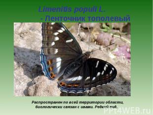 Limenitis populi L. - Ленточник тополевый Распространен по всей территории облас