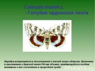 Catocala fraxini L. - Голубая орденская лента . Изредка встречается в лесостепно