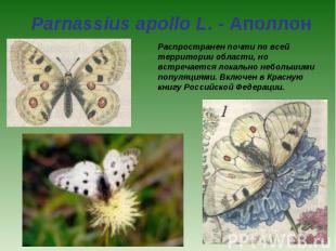 Parnassius apollo L. - Аполлон Распространен почти по всей территории области, н