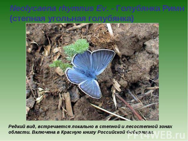 Neolycaena rhymnus Ev. - Голубянка Римн (степная угольная голубянка) Редкий вид, встречается локально в степной и лесостепной зонах области. Включена в Красную книгу Российской Федерации.