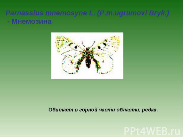 Parnassius mnemosyne L. (P.m.ugrumovi Bryk.) - Мнемозина Обитает в горной части области, редка.