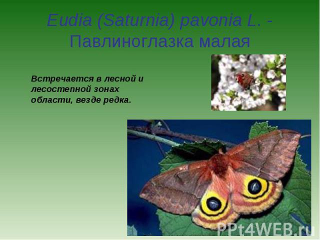 Eudia (Saturnia) pavonia L. - Павлиноглазка малая Встречается в лесной и лесостепной зонах области, везде редка.