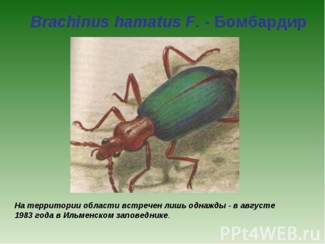 Brachinus hamatus F. - Бомбардир На территории области встречен лишь однажды - в августе 1983 года в Ильменском заповеднике.