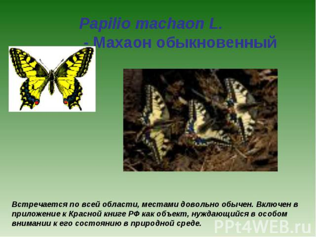 Papilio machaon L. - Махаон обыкновенный Встречается по всей области, местами довольно обычен. Включен в приложение к Красной книге РФ как объект, нуждающийся в особом внимании к его состоянию в природной среде.