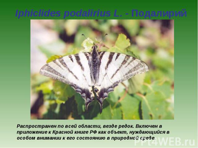Iphiclides podalirius L. - Подалирий Распространен по всей области, везде редок. Включен в приложение к Красной книге РФ как объект, нуждающийся в особом внимании к его состоянию в природной среде.