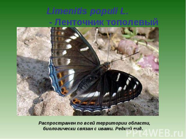 Limenitis populi L. - Ленточник тополевый Распространен по всей территории области, биологически связан с ивами. Редкий вид.