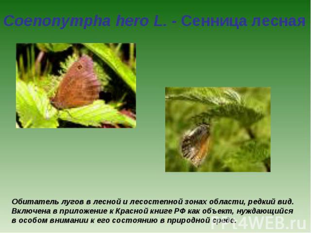 Coenonympha hero L. - Сенница лесная Обитатель лугов в лесной и лесостепной зонах области, редкий вид. Включена в приложение к Красной книге РФ как объект, нуждающийся в особом внимании к его состоянию в природной среде.