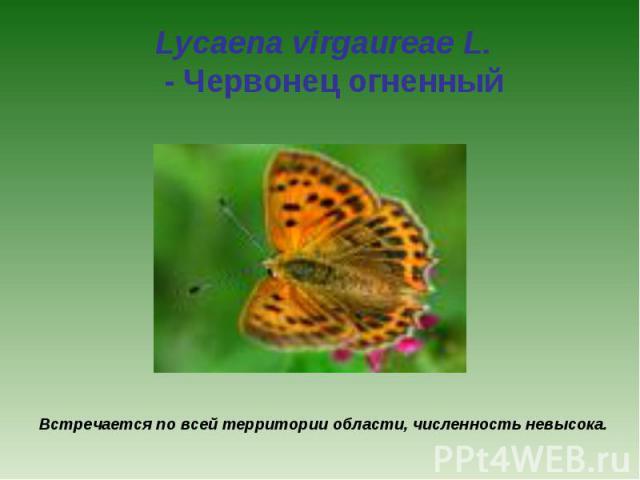 Lycaena virgaureae L. - Червонец огненный Встречается по всей территории области, численность невысока.