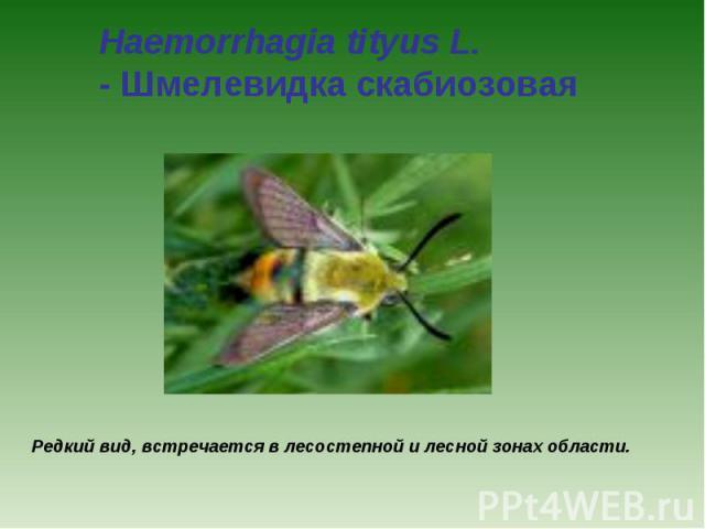 Haemorrhagia tityus L. - Шмелевидка скабиозовая Редкий вид, встречается в лесостепной и лесной зонах области.