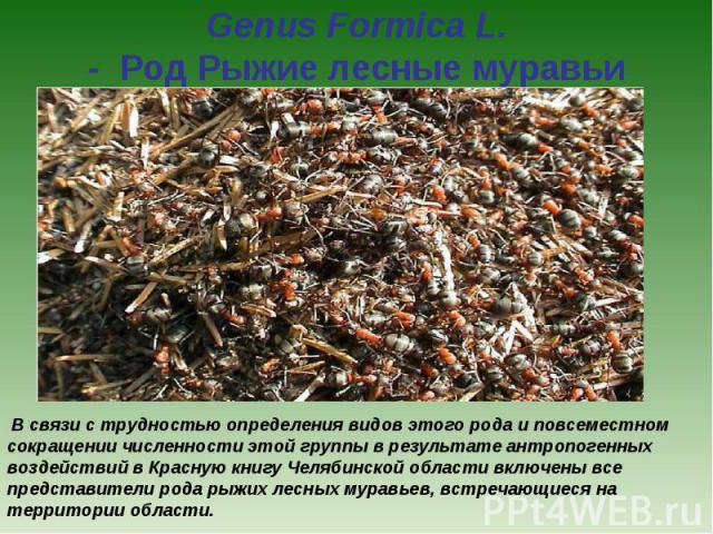 Genus Formica L. - Род Рыжие лесные муравьи В связи с трудностью определения видов этого рода и повсеместном сокращении численности этой группы в результате антропогенных воздействий в Красную книгу Челябинской области включены все представители р…