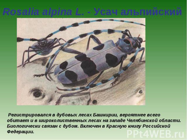 Rosalia alpina L. - Усач альпийский Регистрировался в дубовых лесах Башкирии, вероятнее всего обитает и в широколиственных лесах на западе Челябинской области. Биологически связан с дубом. Включен в Красную книгу Российской Федерации.