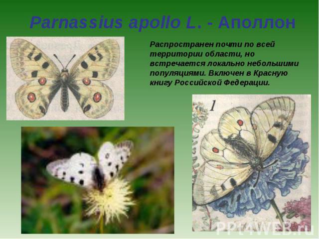 Parnassius apollo L. - Аполлон Распространен почти по всей территории области, но встречается локально небольшими популяциями. Включен в Красную книгу Российской Федерации.