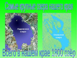 Самые крупные озера нашего края Всего в нашем крае 1800 озёр