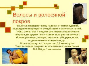 Волосы и волосяной покров Волосы защищают кожу головы от повреждений, охлаждения